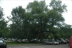 Nationally Significant tree protected