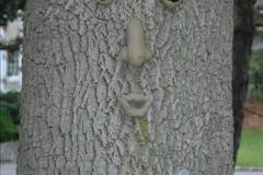 Happily protected tree in Ottawa