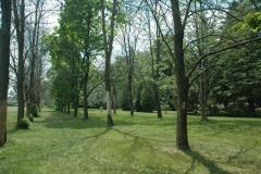 Heavily infested trees in city park setting